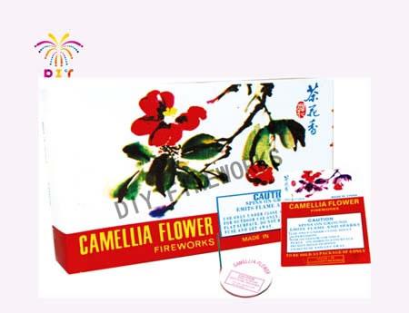 CAMELLIA FLOWER FIREWORKS